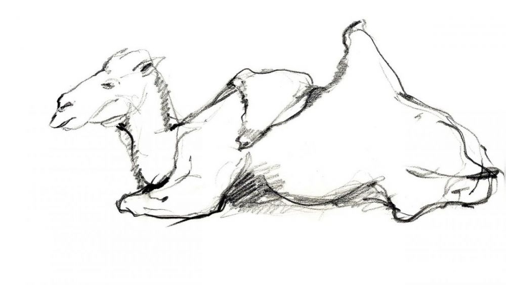 Sketchbook-IV---Animals--Nature-08